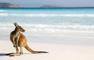 kangaroo_island2