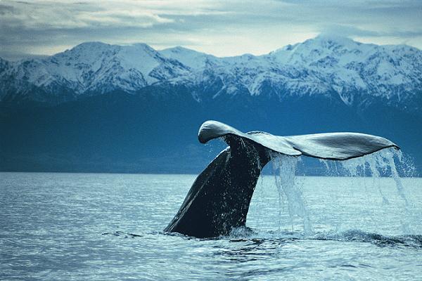 whales_NZ